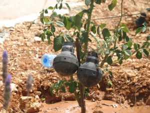 Old tear gas canisters decorating the garden